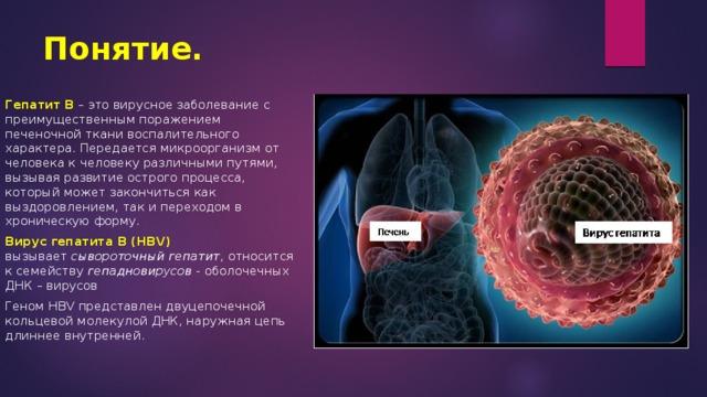 Понятие. Гепатит В – это вирусное заболевание с преимущественным поражением печеночной ткани воспалительного характера. Передается микроорганизм от человека к человеку различными путями, вызывая развитие острого процесса, который может закончиться как выздоровлением, так и переходом в хроническую форму. Вирус гепатита В (HBV) вызывает сывороточный гепатит , относится к семейству гепадновирусов - оболочечных ДНК – вирусов Геном HBV представлен двуцепочечной кольцевой молекулой ДНК, наружная цепь длиннее внутренней.