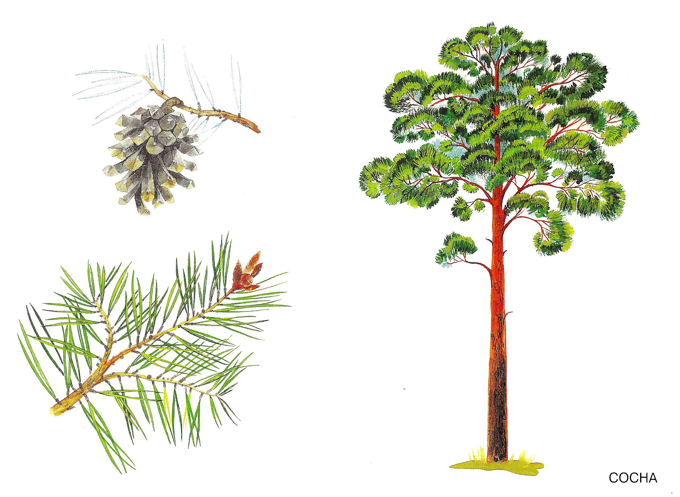 картинки деревьев для начальных классов кресло велико