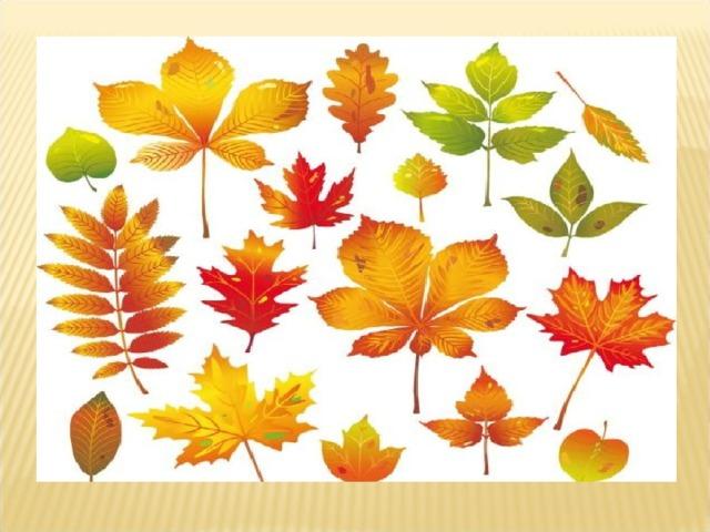 заслугах листья клена дуба березы рябины рисунки что