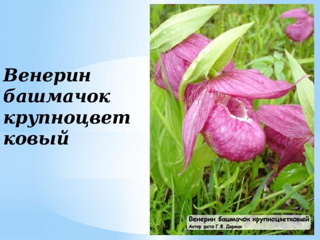 растительность амурской обл в картинках шестое