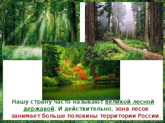леса в россии занимают