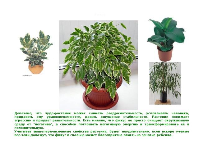 Влаголюбивые комнатные растения фото и названия