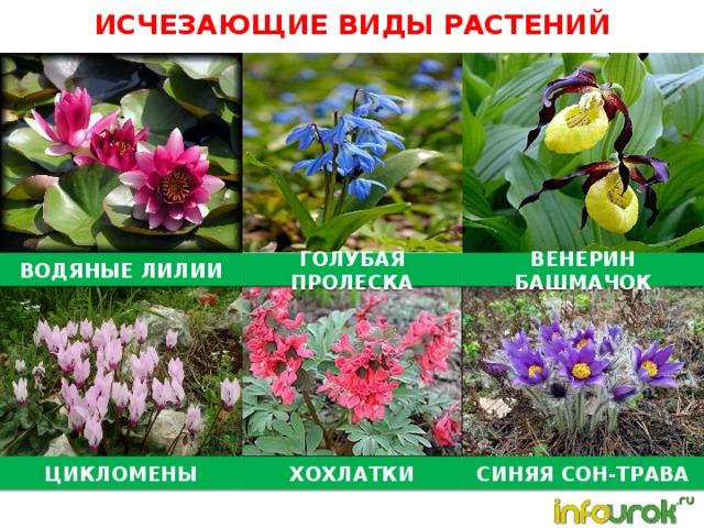 растения на грани исчезновения в россии с картинками слезами