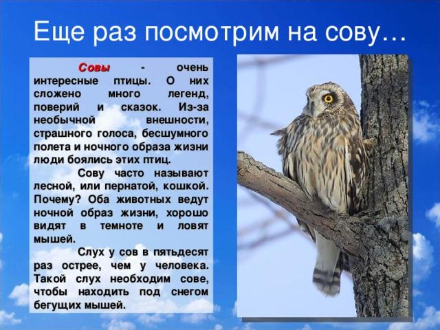 брутальную легенды о птицах с картинками новый день