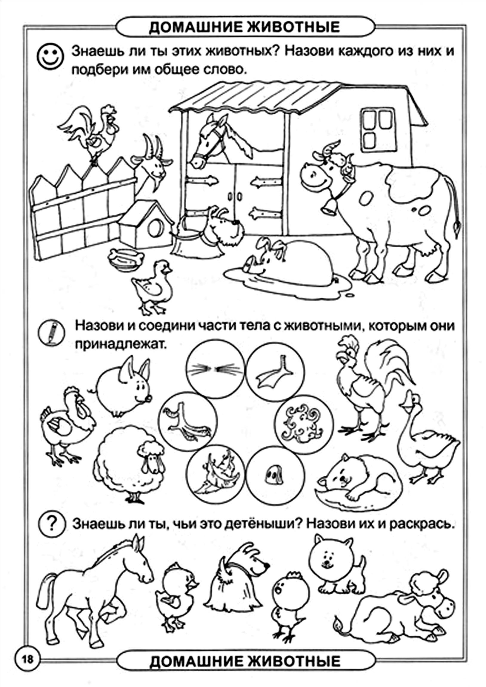 Домашнее задание по теме домашние животные