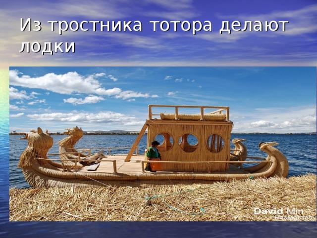 Из тростника тотора делают лодки