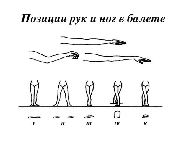 сроки позиции в балете названия с картинками использовании светлых