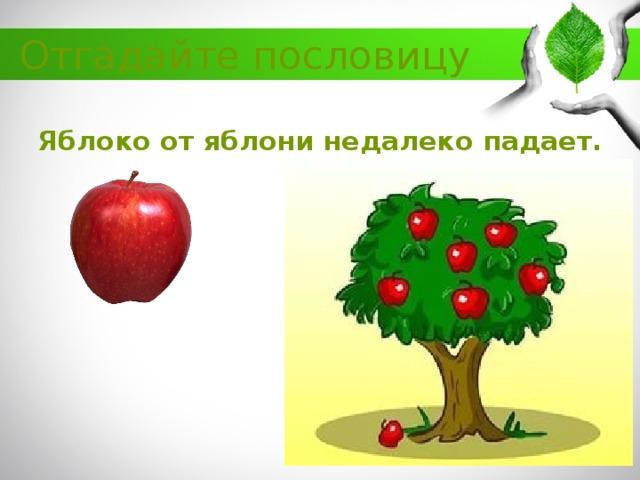 картинка яблоко от недалеко падает лишь