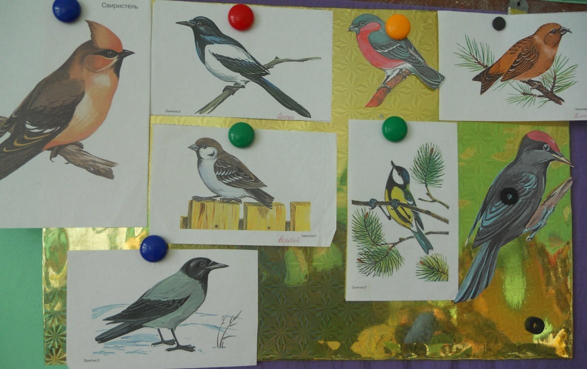 Птицы нашего края занятие в подготовительной группе презентация