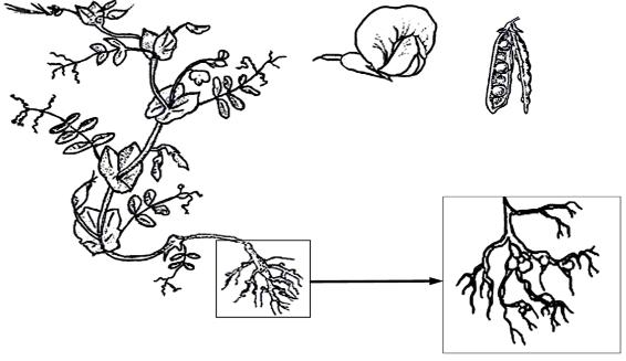 Задания егэ с картинками по биологии