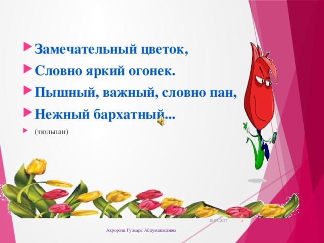 Замечательный цветок, Словно яркий огонек. Пышный, важный, словно пан, Нежный бархатный... (тюльпан)
