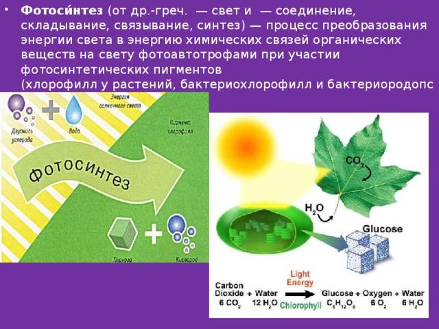 фотосинтез и бета синтез последний год