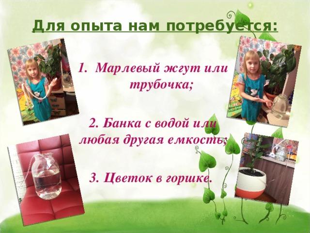 Для опыта нам потребуется: Марлевый жгут или трубочка;  2. Банка с водой или любая другая емкость;  3. Цветок в горшке.