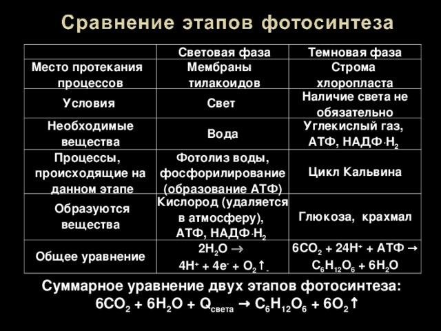 автомобиль сравнение темновой и световой фазы фотосинтеза фото