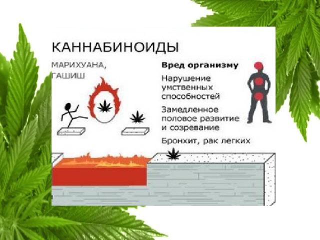 Вред человеку приносит какой конопля курения коноплей от последствия