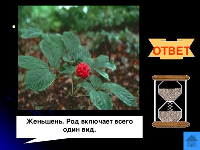 Вопрос 10 Панакс (от греческого «пан»- всё и «акос»- исцеляющий)- это родовое название дал растению К.Линней в 1753 году. Что это за растение? Что вам о нём известно? ОТВЕТ Женьшень. Род включает всего один вид.