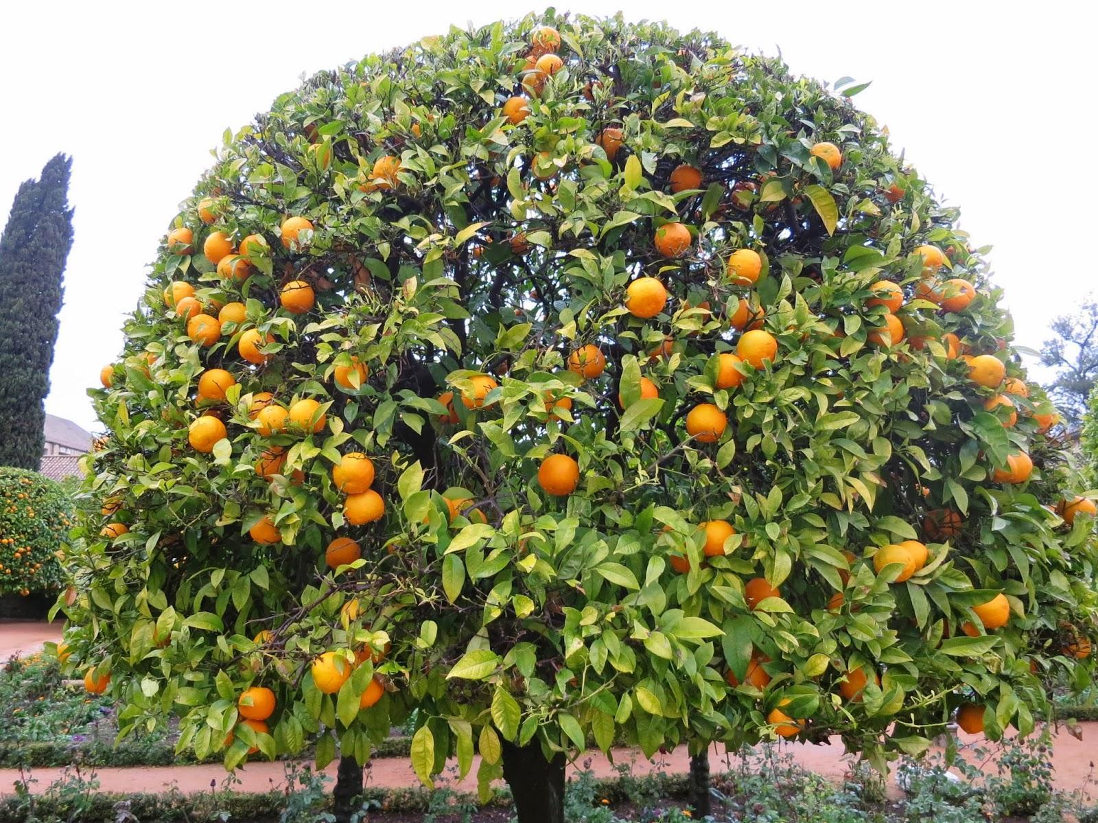 фрукты растут на деревьях картинки бескрайними возможностями