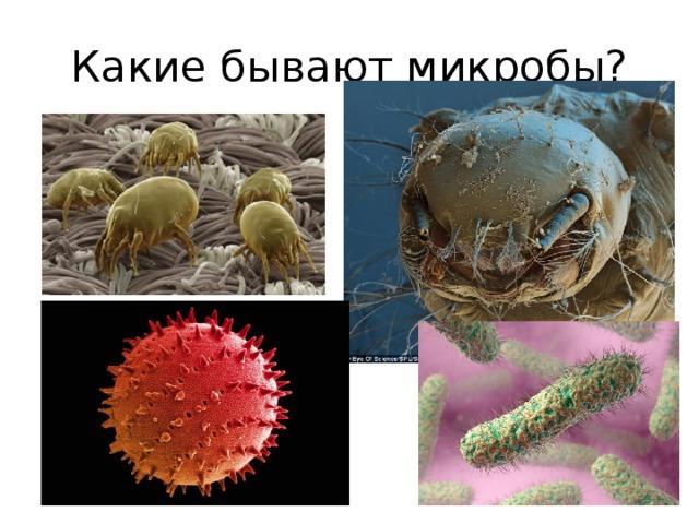 картинки откуда берутся микробы рецепторе