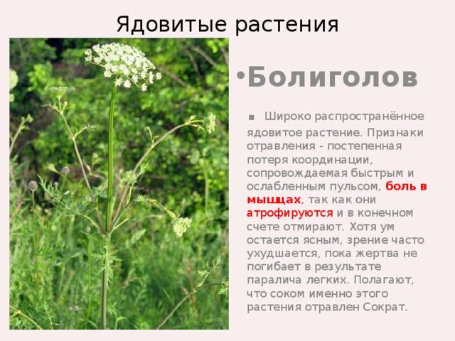 ядовитые растения фото с названиями и описанием гриб