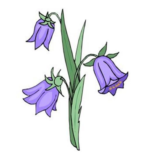 это красивые рисунки колокольчиков не цветов уже