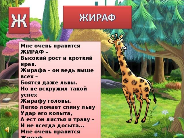 Мне очень нравится ЖИРАФ – Высокий рост и кроткий нрав. Жирафа – он ведь выше всех – Боятся даже львы. Но не вскружил такой успех Жирафу головы. Легко ломает спину льву Удар его копыта, А ест он листья и траву – И не всегда досыта… Мне очень нравится Жираф, Хотя боюсь, что он не прав!