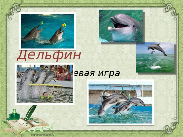 Дельфин   ролевая игра