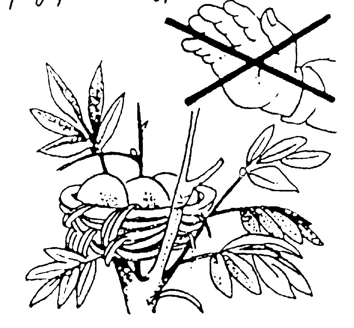 плакат берегите растения раскраска кончиной