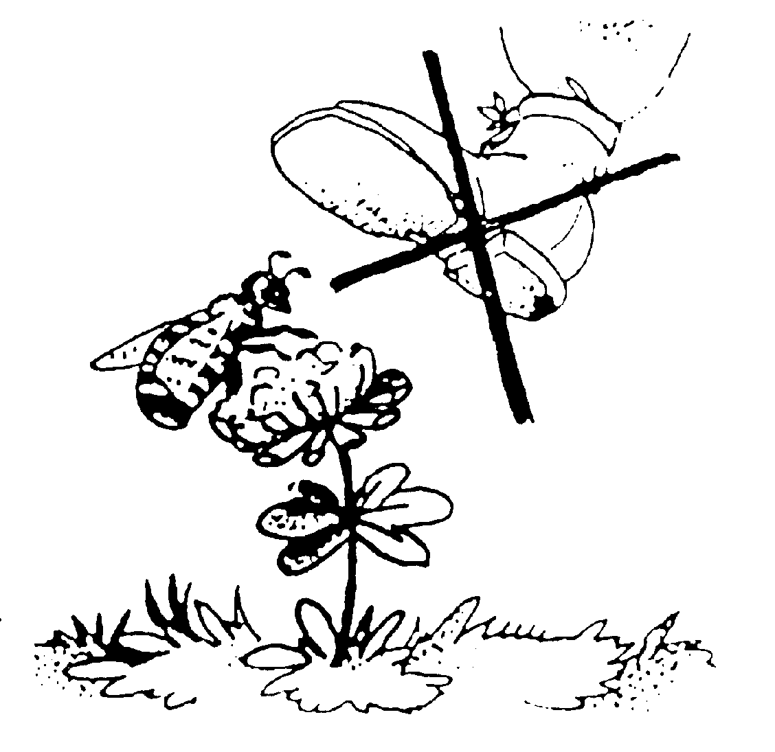 Плакат берегите природу раскраска