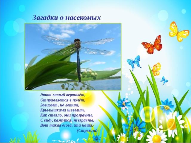 стихи про стрекозу картинка