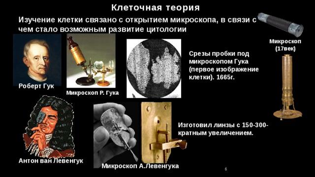 Клеточная теория Изучение клетки связано с открытием микроскопа, в связи с чем стало возможным развитие цитологии Микроскоп(17век) Срезы пробки под микроскопом Гука (первое изображение клетки). 1665г. Роберт Гук Микроскоп Р. Гука Изготовил линзы с 150-300-кратным увеличением. Антон ван Левенгук Микроскоп А.Левенгука 6