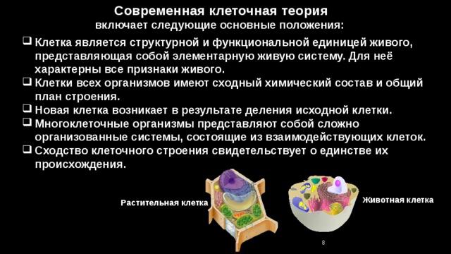 Современная клеточная теория включает следующие основные положения: Клетка является структурной и функциональной единицей живого, представляющая собой элементарную живую систему. Для неё характерны все признаки живого. Клетки всех организмов имеют сходный химический состав и общий план строения. Новая клетка возникает в результате деления исходной клетки. Многоклеточные организмы представляют собой сложно организованные системы, состоящие из взаимодействующих клеток. Сходство клеточного строения свидетельствует о единстве их происхождения. Животная клетка Растительная клетка 7