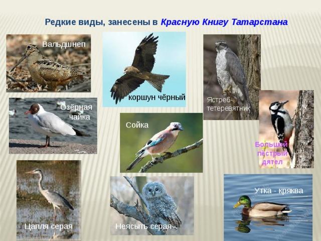 это, животные красной книги татарстана фото и описание нем серафима