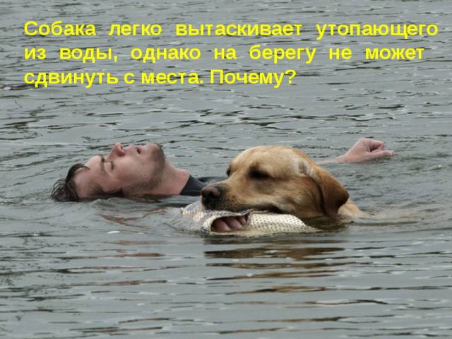 Собака легко вытаскивает утопающего из воды, однако на берегу не может сдвинуть с места. Почему?