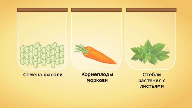 Корнеплоды моркови Стебли растения с листьями Семена фасоли