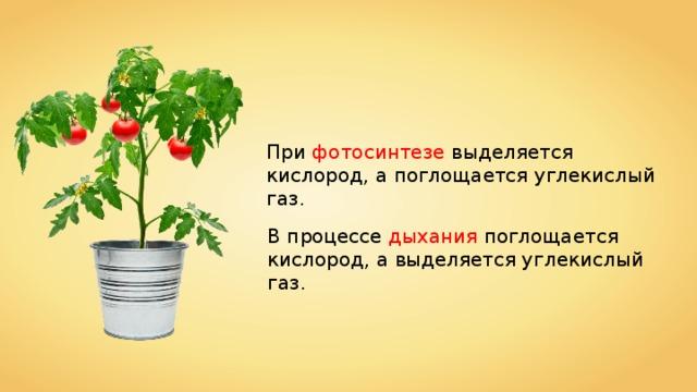 При фотосинтезе выделяется кислород, а поглощается углекислый газ. В процессе дыхания поглощается кислород, а выделяется углекислый газ.