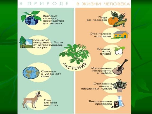 Реферат на тему значение растений в природе 4673