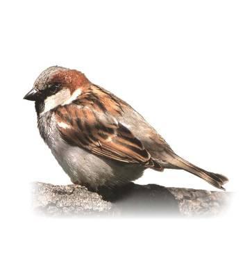 Птицы курской области фото название и описание