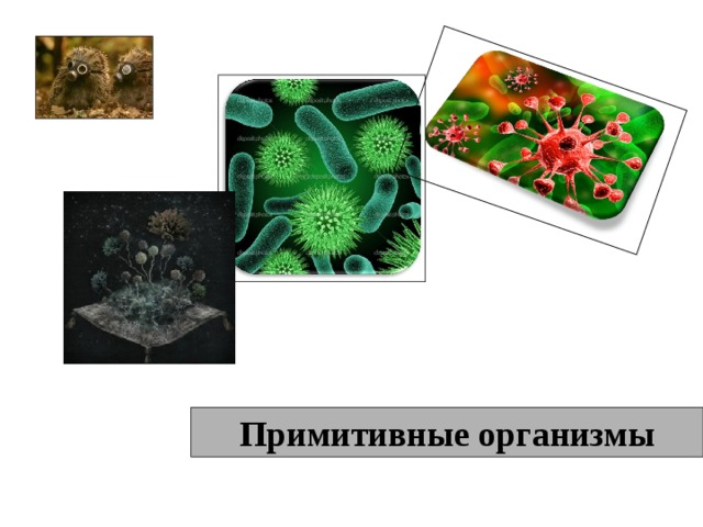 Примитивные организмы