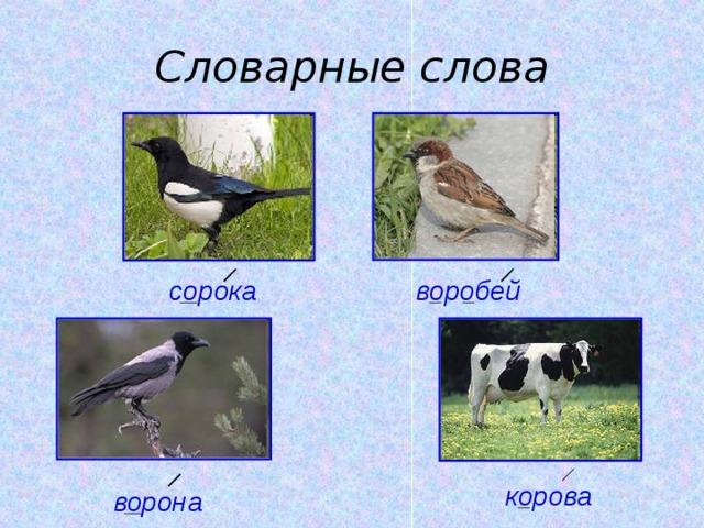 Словарные слова воробей сорока корова ворона