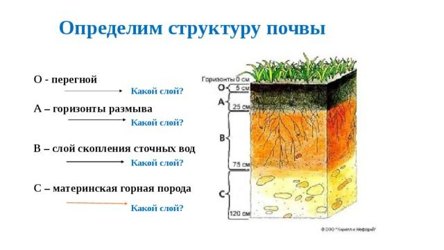 состав и структура почвы
