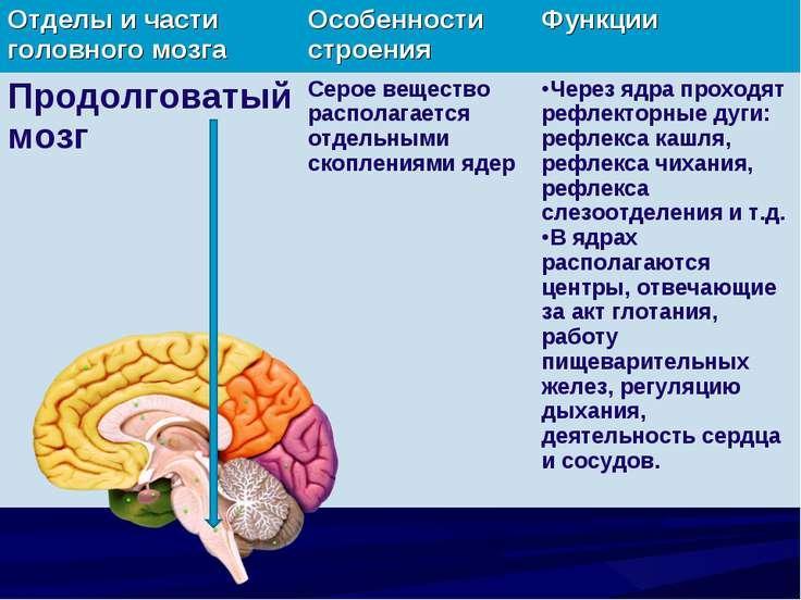 Реферат на тему кора больших полушарий головного мозга 2830