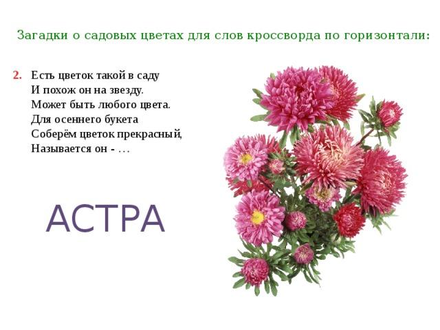 Про букет цветов загадки, магазин цветов