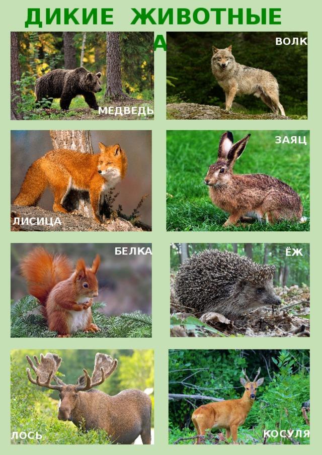 Днем, картинки с изображением зайца лисы белки волка медведя бурундука ежа
