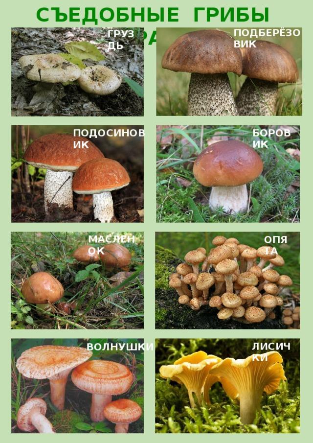 что каталог грибов с фото и описанием россии влившись толпу выждав