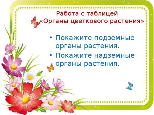 Работа с таблицей  «Органы цветкового растения» Покажите подземные органы растения. Покажите надземные органы растения.