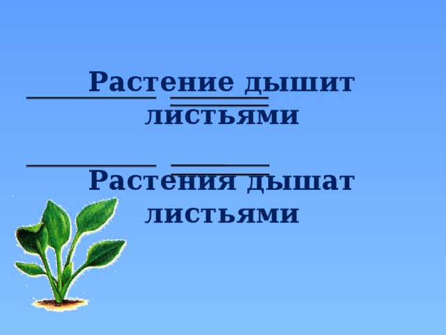 Растение дышит листьями  Растения дышат листьями
