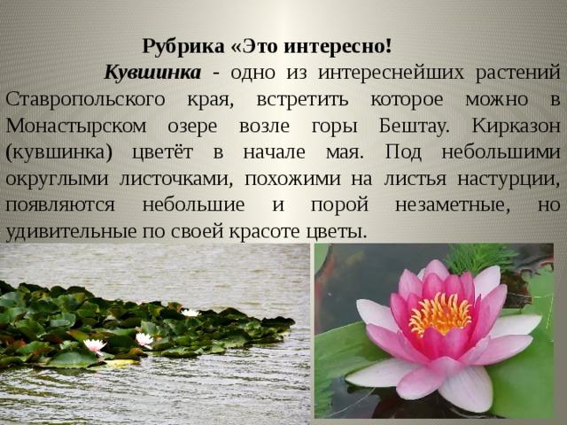 перенастроили растения ставропольский край фото описание после лепки