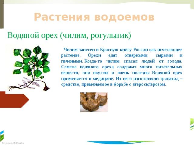 Растения водоемов Водяной орех (чилим, рогульник)  Чилим занесен в Красную книгу России как исчезающее растение. Орехи едят отварными, сырыми и печеными.Когда-то чилим спасал людей от голода. Семена водяного ореха содержат много питательных веществ, они вкусны и очень полезны.Водяной орех применяется в медицине. Из него изготовляли трапазид – средство, применяемое в борьбе с атеросклерозом.