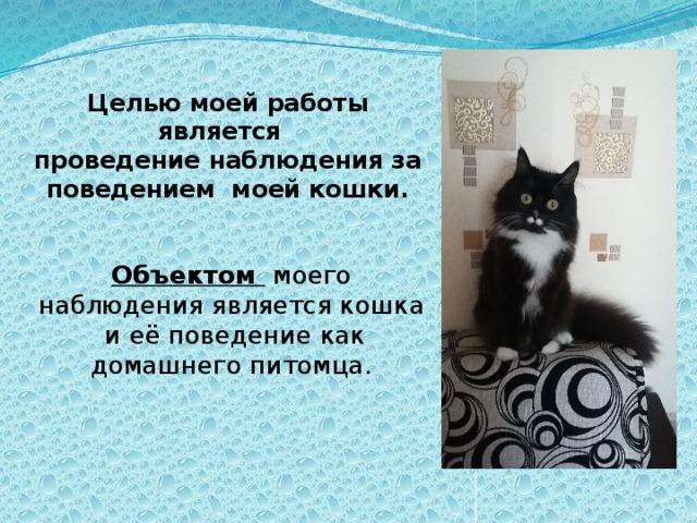 Наблюдение за домашними кошками реферат 6675