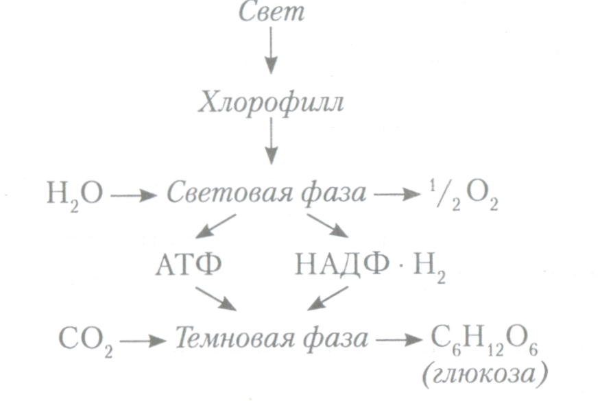 задачи на фотосинтез с решением столицы башкирии
